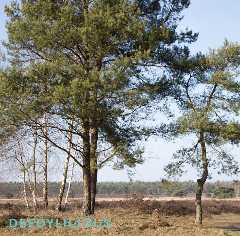 Wildspeurtocht op de Veluwe   www.deedylicious.nl